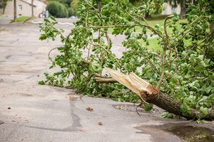 Kansas City Tree Injury Attorneys